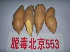 常年出售红薯
