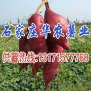 石家庄华农薯业有限公司