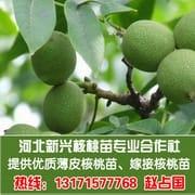 河北新兴核桃苗专业合作社