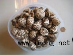 大量批发零售优质香菇花菇