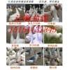 供应鹅苗 鹅苗价格 提供鹅苗技术 回收成品