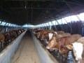 怎样合理修建肉牛舍