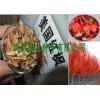 红枫种子价格出售美国红枫种子