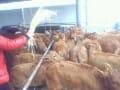 中国肉牛业发展情况