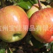 杭州宝佳果品有限公司