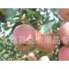 美八苹果产地 美八苹果市场 美八苹果出售 美八苹果基地