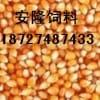 《安隆》每月求购干玉米3600吨