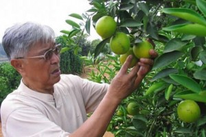 商业大佬爱农业,哪些农产品吸引资本大佬?