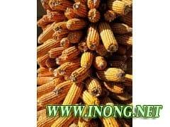 小麦,玉米花生