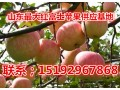 山东红富士苹果产地