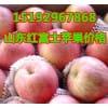 山东红富士苹果价格 红富士苹果批发价格