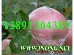 陕西红富士苹果基地红提葡萄产地冬枣核桃酥梨产地价格