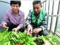让农业走进城市——微农业造梦城市农夫