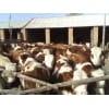 2015年养殖行业什么最挣钱--养肉牛 肉牛养殖前景好
