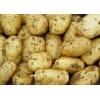 供应批发土豆,山东土豆哪里便宜,山东土豆产地价格