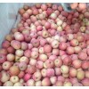 山东省红富士苹果哪里批发便宜