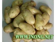 河北唐山荷兰土豆 白心马铃薯
