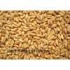 酿造企业现金求购高粱大米玉米小麦
