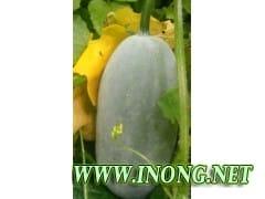 泰国迷你香冬瓜大量出售