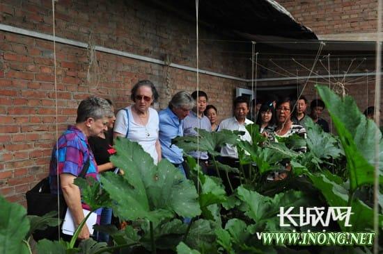 以色列专家团赴河北考察 献计农业项目发展