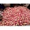山东万亩苹果种植园红富士以上市