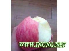 山东苹果产地批发价格是多少