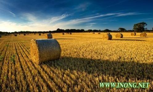 现代农业强国的五大重要标志