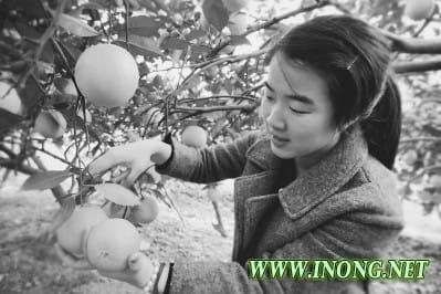 推进农业经济多元化发展