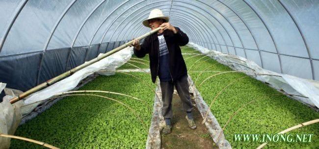 首家外商独资农业工厂换东家 日本朝日集团为何选择逃离