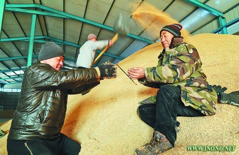 发展生态农业 克东县宝泉镇引进不勒稻米加工生产线