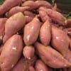 红薯行情优质窖藏红薯今日成交价格