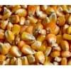 诚心求购玉米大豆高粱碎米等饲料原料