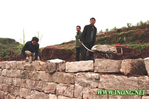 丰都保合镇:实施土地整治 提升农业效益