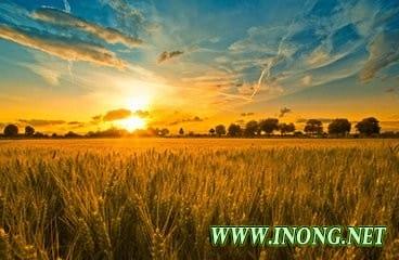 找准农业供给侧结构性改革的关键