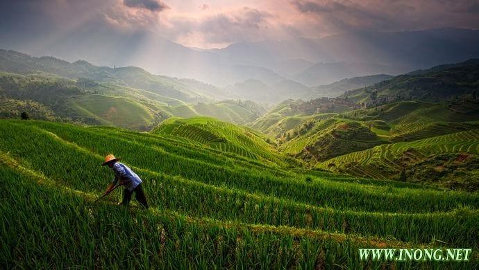 中国农业正悄然发生历史性巨变,供给侧改革可促产品迈向高端和差异化