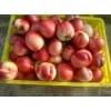 陕西中油5油桃,中油12油桃上市行情,早熟油桃上市价格