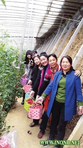 科技支撑,引领高效生态农业