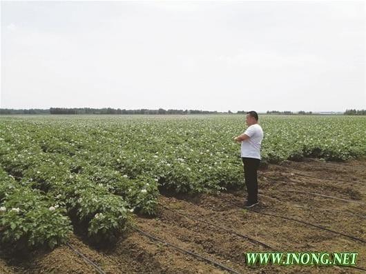 图文:襄州:农业生产大区的华彩蝶变