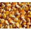 饲料厂求购菜饼 大豆 玉米 高粱 麸皮 棉粕 次粉等原料