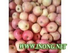 山东冷库苹果低价出售
