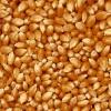 诚信求购:玉米小麦高粱大豆黄豆青豆花生等原料