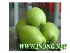 陕西渭南蒲城早酥梨正在热卖中