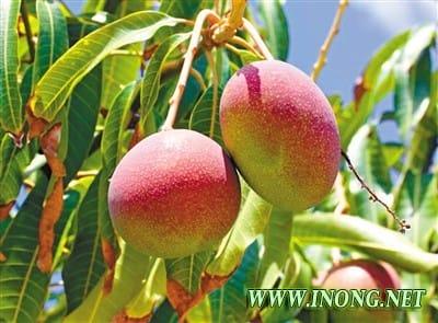 攀枝花深入推进 农业供给侧结构性改革