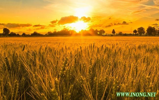大农业要转型升级 背后的生意逻辑才是关键