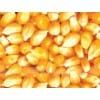 厂家现金收购玉米 菜饼 小麦 高粱大豆棉粕麸皮次粉碎米