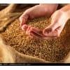 求购小麦、玉米、棉粕、蚕豆