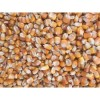 玉米收购商 收购优质玉米等饲料原料量大从优