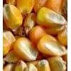 诚信收购玉米 大豆 高粱