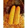 求购玉米3000吨