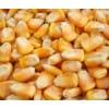 汉江大量求购新玉米陈玉米
